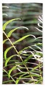 Ferns In Natural Light Beach Towel