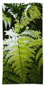 Ferns Beach Towel