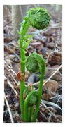 Fiddlehead Ferns In Spring Beach Towel