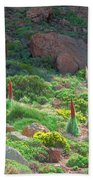 Field Of Echium Wildpretii In The Teide National Park Beach Towel