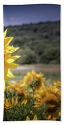 Field Of Sunflowers Beach Towel by Jim DeLillo