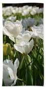 Field Of White Tulips Beach Towel