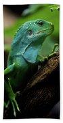 Fiji Iguana In Profile On Tree Branch Beach Towel