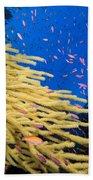Fijian Reef Scene Beach Towel
