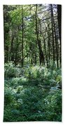 Filtered Forest Sunlight In Oregon Beach Towel