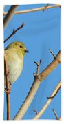 Finch Beach Towel