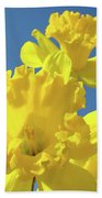 Fine Art Daffodils Floral Spring Flowers Art Prints Canvas Baslee Troutman Beach Towel