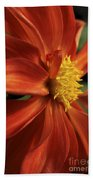 Fire Dahlia Beach Towel