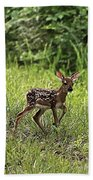 First Baby Fawn Of The Year Beach Towel