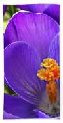 First Crocus Beach Towel