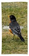 First Robin Of Spring Beach Towel