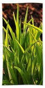 First Signs Of Life Beach Towel