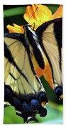 Fish Eye Butterfly Beach Towel