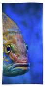 Fish Frown Story Beach Towel