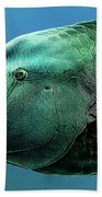 Fish Lips Beach Towel