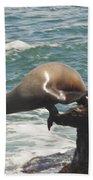 Fishing Sea Lion Beach Towel