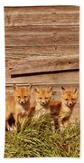 Five Fox Kits By Old Saskatchewan Granary Beach Towel