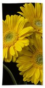 Five Gerbera Daisies Beach Towel
