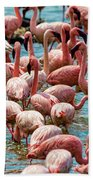 Flamboyance Of Flamingos Beach Sheet