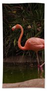 Flamingo 1 San Diego Zoo Beach Towel