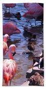 Flamingo Family  Beach Towel