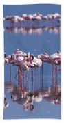 Flamingo Reflection - Lake Nakuru Beach Towel