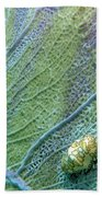 Flamingo Tongue Beach Towel