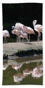 Flamingos With Reflection Beach Towel