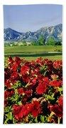 210546-v-flatirons And Flowers V  Beach Towel