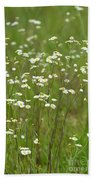 Fleabane In The Meadow Beach Towel