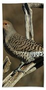 Flicker On Cedar Beach Towel
