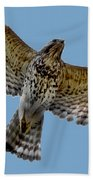 Flight Of The Red Shouldered Hawk Beach Towel