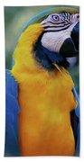 Flirtacious Macaw Beach Towel
