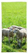 Flock Of Sheep Standing In A Field Waiting Beach Towel