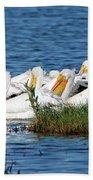 Flock Of White Pelicans Beach Towel