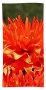 Floral Orange Dahlia Flowers Art Prints Beach Towel