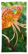 Floral Tiger Lily Flower Art Print Orange Lilies Baslee Troutman Beach Sheet