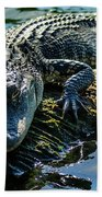 Florida Alligator Beach Towel