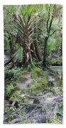 Florida Landscape - Lithia Springs Beach Towel