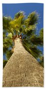 Florida Palms Beach Towel