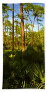 Florida Pine Forest Beach Towel