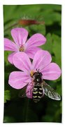 Flower Fly On Stinky Bob Beach Towel