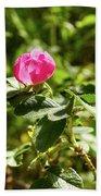Flower Of Eglantine - 2 Beach Towel