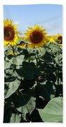 Flower Sunflower,yellow Flower, Beach Towel