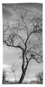 Trees Are Talking To Us Beach Towel