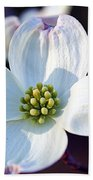 Flowering Dogwood Beach Towel