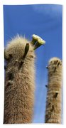 Flowering Echinopsis Atacamensis Cactus Bolivia Beach Towel
