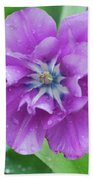 Flowering Purple Tulips With Raindrops From A Spring Rain Beach Towel