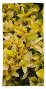 Flowers Of Domitilla Beach Sheet