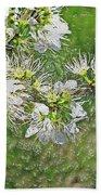Flowers Of The Blackthorn Shrub Beach Towel